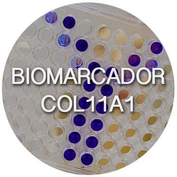 col11A1esp